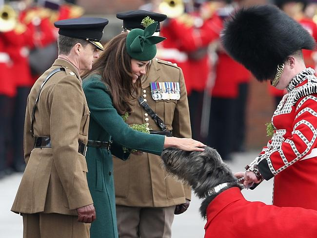 Good boy ... Catherine, Duchess of Cambridge presents a 'Shamrock' to Regimental Mascot Domhnall during the St Patrick's Day parade at Mons Barracks.