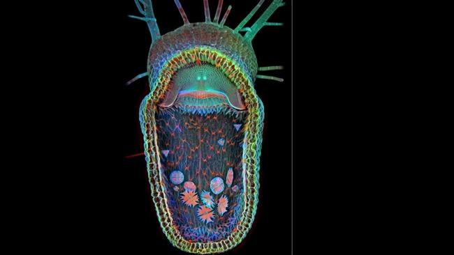 The competition-winnig shot of a carnivorous plant with single-cell organisms inside by Dr Igor Siwanowicz. Source: supplied