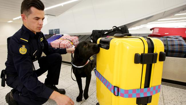 An Australian Border Force officer with his dog at work at Sydney International Airport. Picture Cameron Richardson