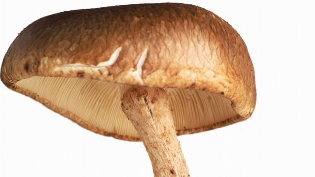 For Jacqui's sake ... A shiitake mushroom.