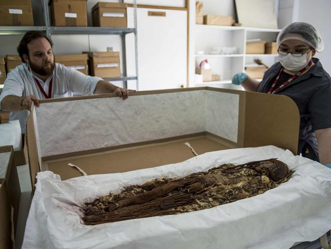 Chilean anthropologist Veronica Silva shows one of the mummies from the ancient Chinchorro culture at the National Museum of Natural History in Santiago. Picture: Martin Bernetti