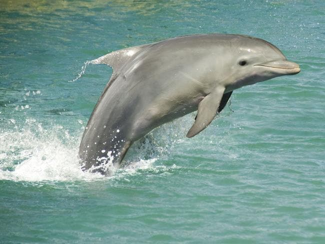 14 per cent of Australians put swimming with dolphins on their bucket list.