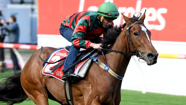 Egg Tart has been well backed to win the Coolmore Classic. Picture: AAP