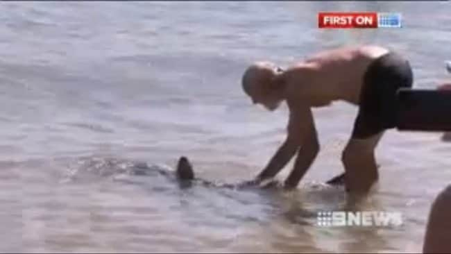 Paul Marshallsea shown grabbing onto the Bronze Whaler's tail. Picture: Channel 9