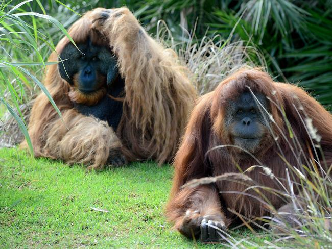 Karta, right, is pregnant for the sixth time - after losing all her previous babies. She's with her partner and to-be father Kluet. Picture: Mark Brake