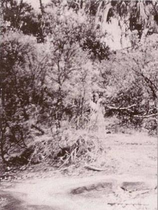 The Watcher: This image, taken in 1959 in Alice Springs, seems to capture what looks like a female figure looking out from behind the scrub wearing a long white gown. Is she holding binoculars? Or is it just a trick of light? Perhaps a double exposure accidentally printed onto one image? Picture: Supplied