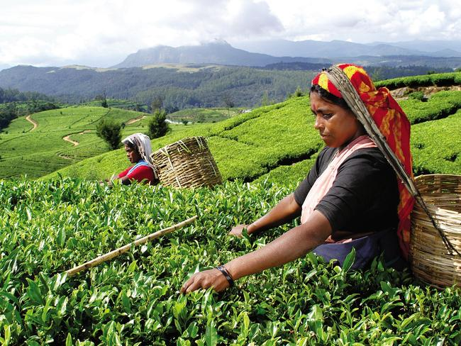Sri Lanka has stunning tea plantations, and the hills offer respite from the heat.