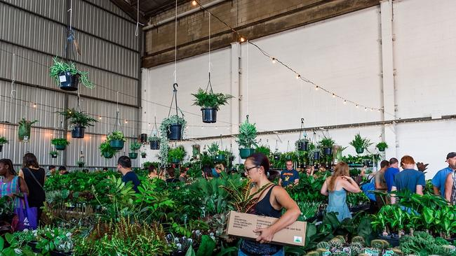 The Jungle Collective is hosting a plant sale at Plant 3. Picture: Mooikin