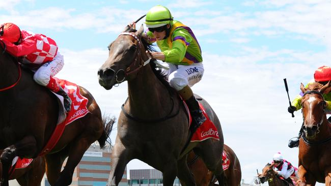 Limestone resumes at Moonee Valley. Picture: Getty Images