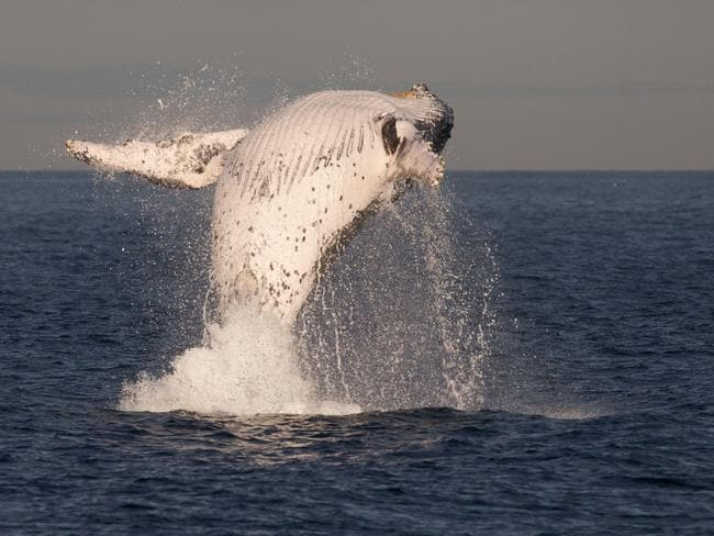 So much fun. Picture: John Goodridge/Whale Watching Sydney