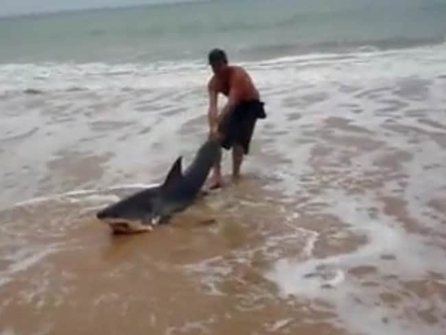Mr Cox said he couldn't leave the animal to die to die on the beach so he dragged it, tail first, back into the ocean. Picture:YouTube
