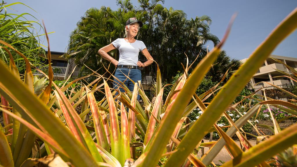 <s1>  Nightcliffe resident and pineapple fancier Geraldine Deutrom is sick of passers by nicking her pineapples .  </s1>  <source></source>Picture: GLENN CAMPBELL  <source></source>