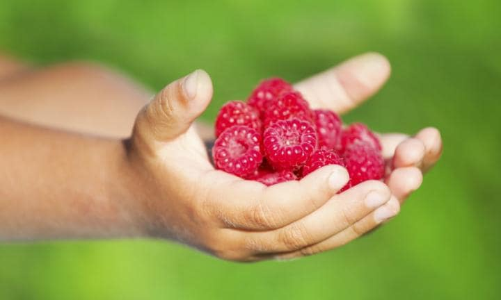Little child holding tasty raspberry in hands