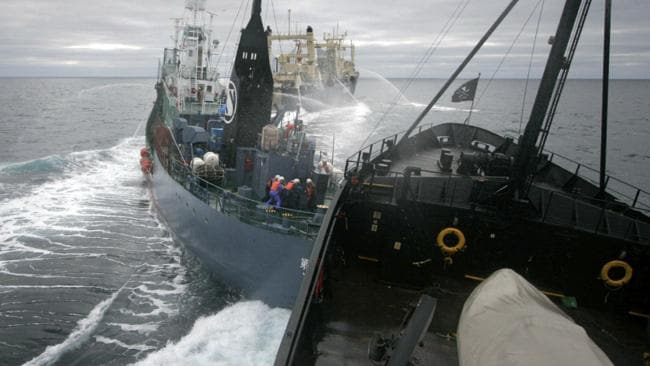 Sea Shepherd ship the M/Y Steve Irwin collides with the stern of Japanese harpoon whaling ship the Yushin Maru No 2 in the Ross Sea, Antarctic Sea in 2009. Picture: Sea Shepherd.