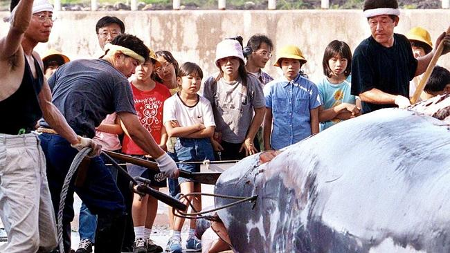 The kill ... fishermen break up the body of a whale at the Wada port in Chiba prefecture, east of Tokyo, while school pupils look on.