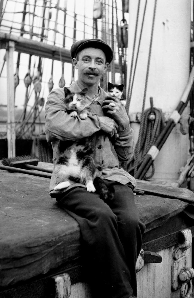A seaman with a cat and kitten aboard ship in about 1910. Convincing ships crews they were useful enabled cats to conquer the world. Samuel J Hood Studio/ANMM Collection.
