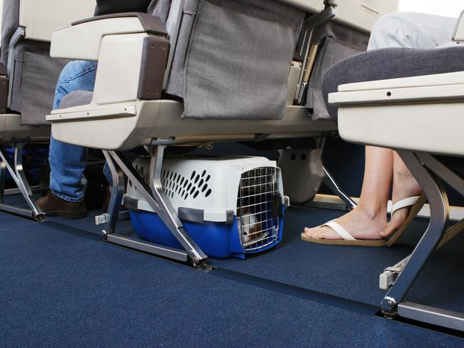 Dogs are often placed under seats, not in overhead bins.