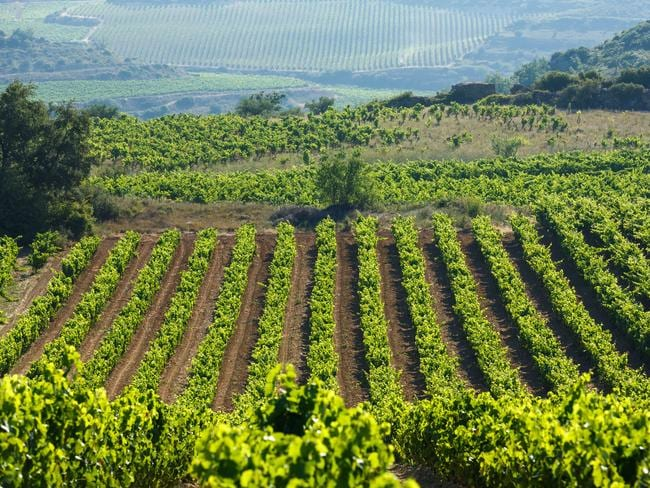 Spain's wine regions are luring in foreign visitors.