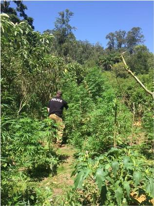 Police raided a number of areas last week as part of ongoing operations targeting cannabis supply in the Sydney area.