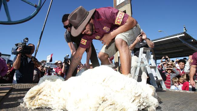 Johnathan Thurston shearing a sheep.