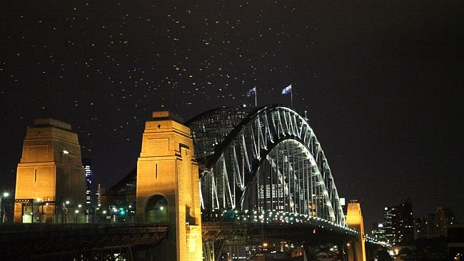 Feeding frenzy: The seagulls above the Sydney Harbour Bridge certainly appreciate it when the Bogongs blow off course.