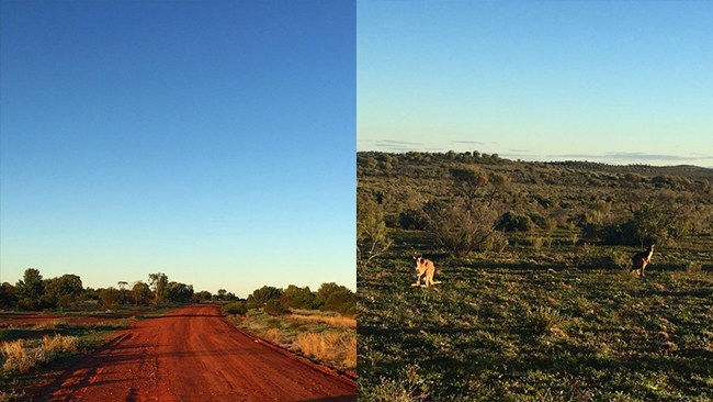 Just me, the open road and a million kangaroos