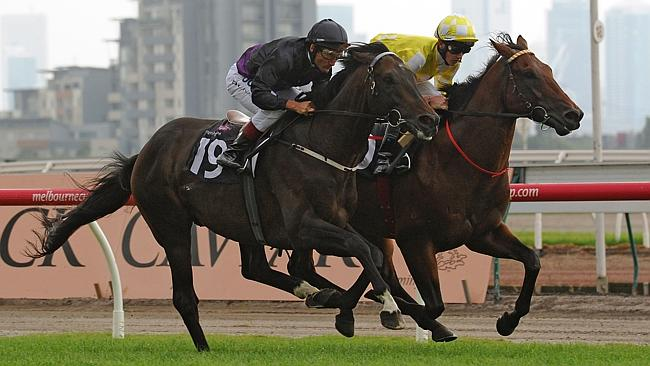 Fiorente warms up for his race return with a track gallop alongside three-year-old stablemate Bull Point at Flemington.