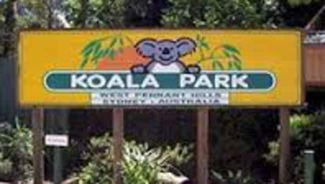 koala park in western sydney facing charges daily telegraph. Black Bedroom Furniture Sets. Home Design Ideas