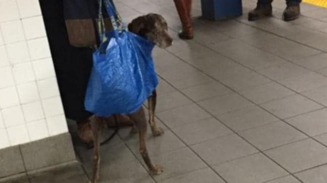 NYC Will Only Let You Bring A Dog On The Subway If It Can Fit In A - Nyc subway bans dogs unless fit bag new yorkers reacted