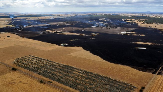 Paddocks stripped by flames in Victoria. Picture: Nicole Garmston