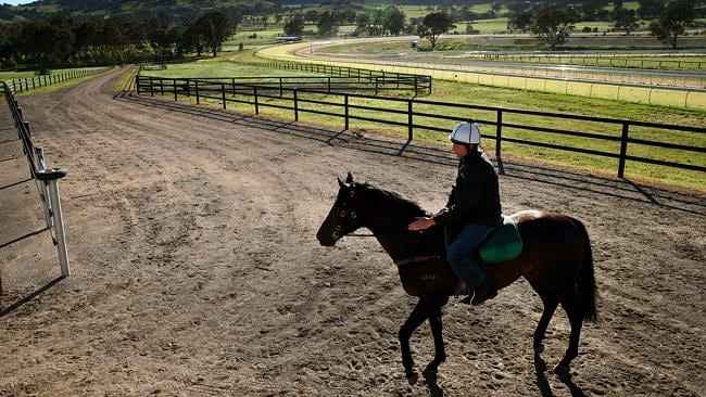 David Hayes' Caulfield Cup hope Jetaway heads out for a gallop at Lindsay Park in Euroa. Picture: Colleen Petch.
