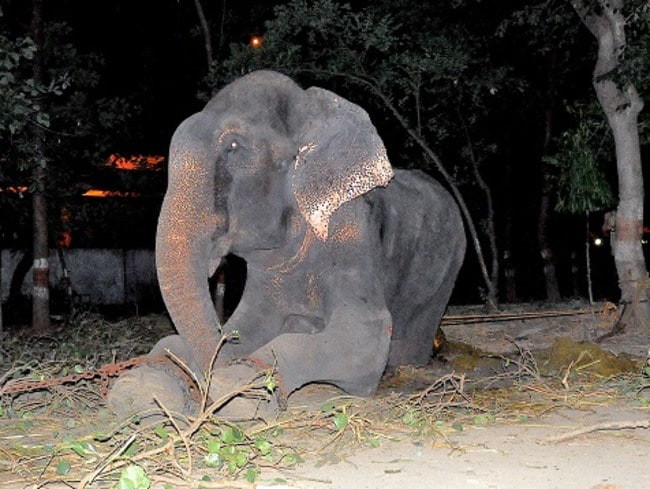 Tears of joy ... 'We knew in our hearts he realised he was being freed', rescuers said. Picture: Wildlife SOS India