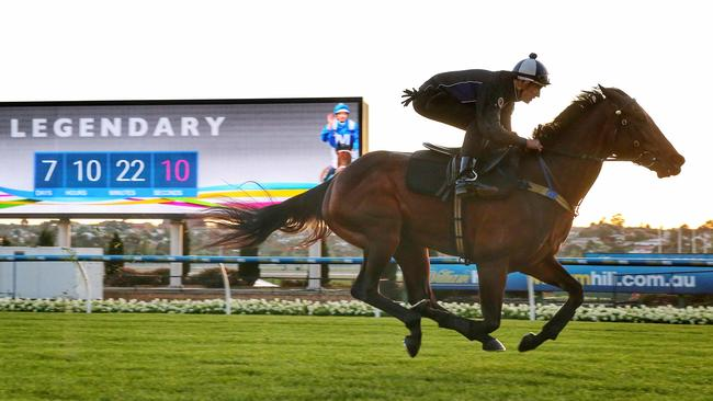 Winx is in great shape for her title defence at Moonee Valley on Saturday. Picture: Colleen Petch
