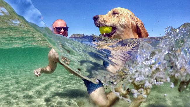 Tom Dutton from Clifton Hill takes his dog Sonny for a swim at Mentone dog beach Picture: Alex Coppel.
