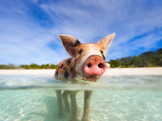 You've definitely seen Pig Beach in the Bahamas in your social media feed. It came in at number 12.