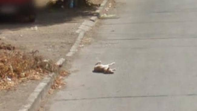 This image shows the dog rolled over. A sign of hope, perhaps?