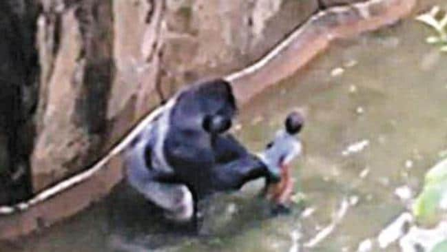 Criticism after rare gorilla is killed to save child in Cincinnati Zoo