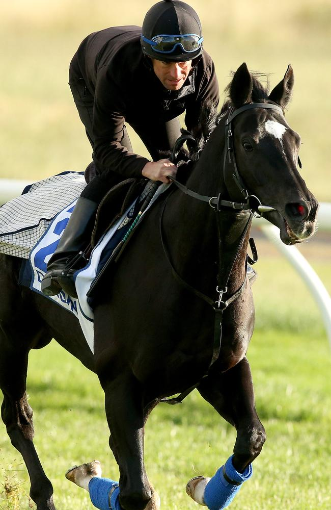 Dandino is expected back on our shores after his impressive fifth placing in last year's Cup.