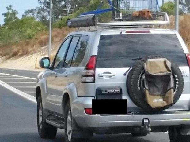 The RSPCA is seeking help identifying the driver of this car, which had a dog in an open cage strapped to the roof while on the Bruce Hwy. Picture: RSPCA