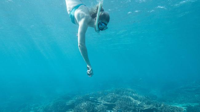 The reef brings in $6.4 billion from tourism every year. Picture: Mark Kolbe/Getty Images for Tourism Queensland