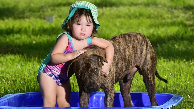 Sienna Brooks, 1, from Yabulu, Queensland, cools off last week with her dog Tank. Picture: Shae Beplate