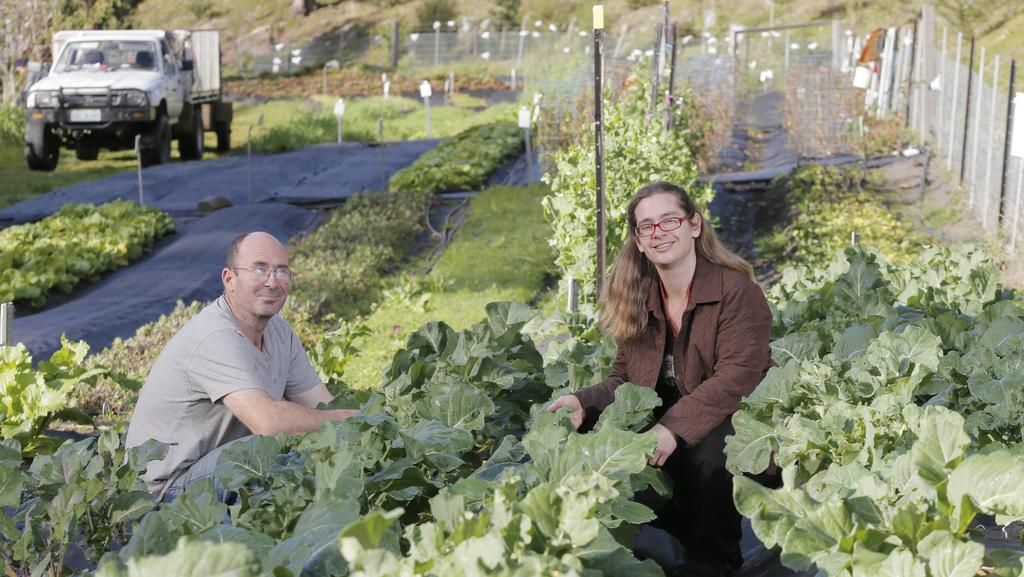 Vegie mission: James Hutchinson and Hermione Hickling own and operate Longley Organic farm outside Hobart. Picture: Matt Thompson