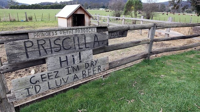 Priscilla the pig remembered