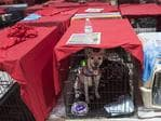 Dogs sit inside their cages as hundreds of people gather in a pet-friendly emergency shelter at the Miami-Dade County Fair Expo Center in Miami, Florida, September 8, 2017, ahead of Hurricane Irma. Florida Governor Rick Scott warned that all of the state's 20 million inhabitants should be prepared to evacuate as Hurricane Irma bears down for a direct hit on the southern US state. Picture: AFP