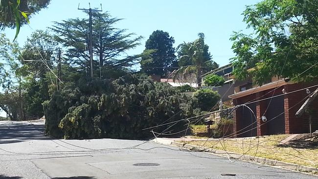 Trees and powerlines have been brought down by strong winds.