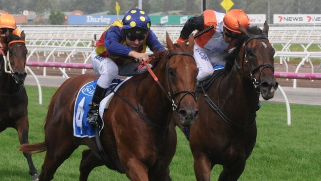 Exciting sprinter Nature Strip held off Prezado to win the Inglis Dash at Flemington.