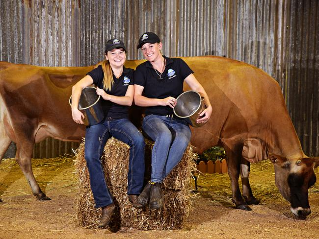 Jess Micallef and Alyse Sciberrans with dairy cow at the Barn at last year's Show. Picture: Adam Yip/Manly Daily