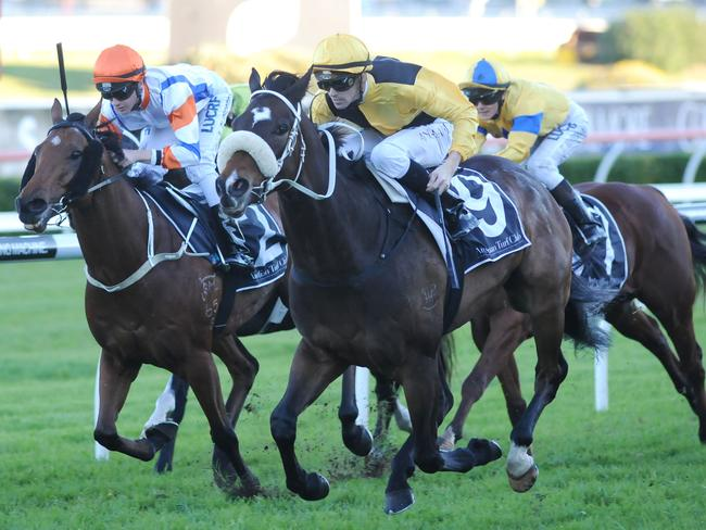 The Chris Waller-trained You'll Never is racing in career best form and can handle the Kensington track layout.
