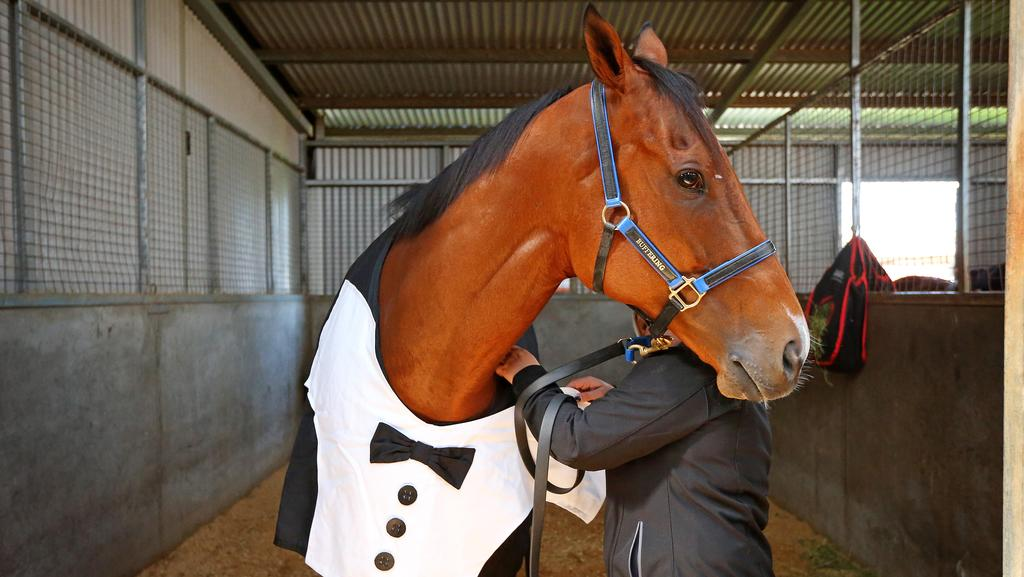 Buffering will line up in the Manikato Stakes on Friday night. Picture: Mark Stewart