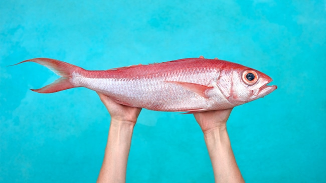 Fish out of water. Image: iStock